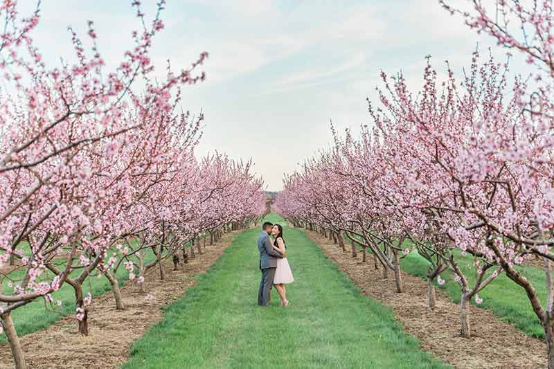 cherry blossom prewedding engagement photoshoot timing planning booking 0