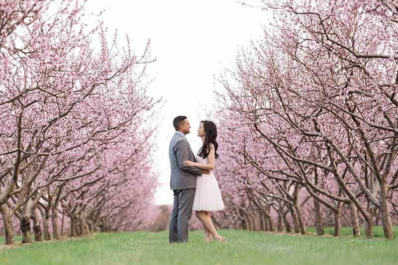 cherry blossom prewedding engagement photoshoot timing planning booking 1