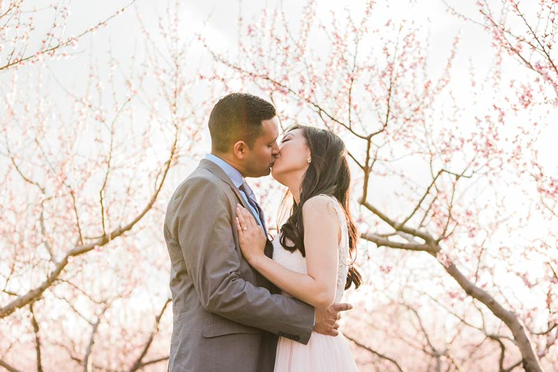 cherry blossom prewedding engagement photoshoot timing planning booking 4