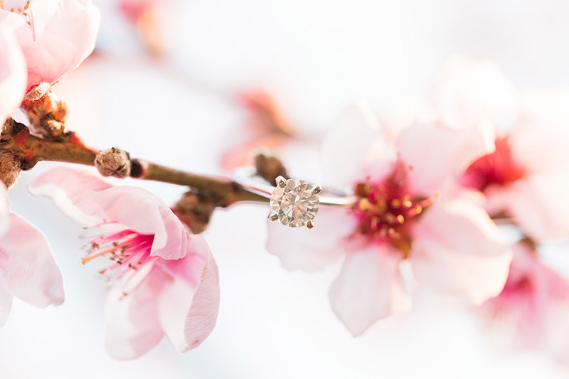 cherry blossom prewedding engagement photoshoot timing planning booking 6