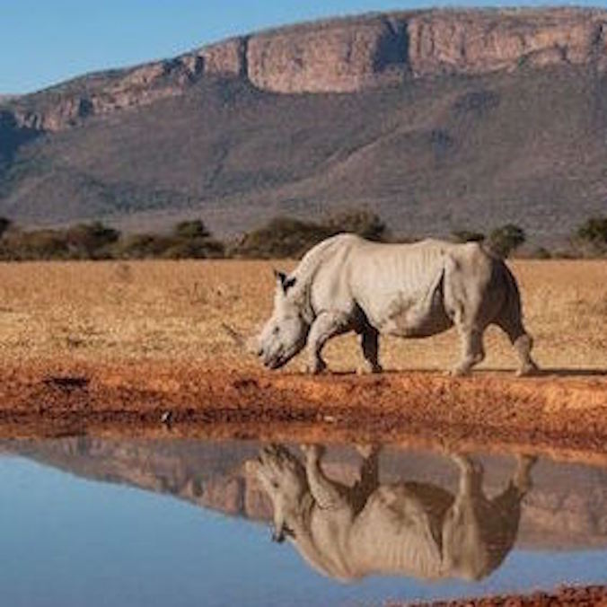 Honeymoon -$10,000 USD ++ (per person) South Africa - 2 weeks (excluding flights)