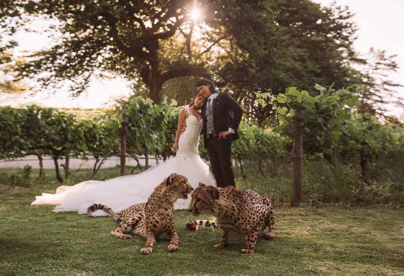 molenvliet cape town south africa vineyard wedding 24