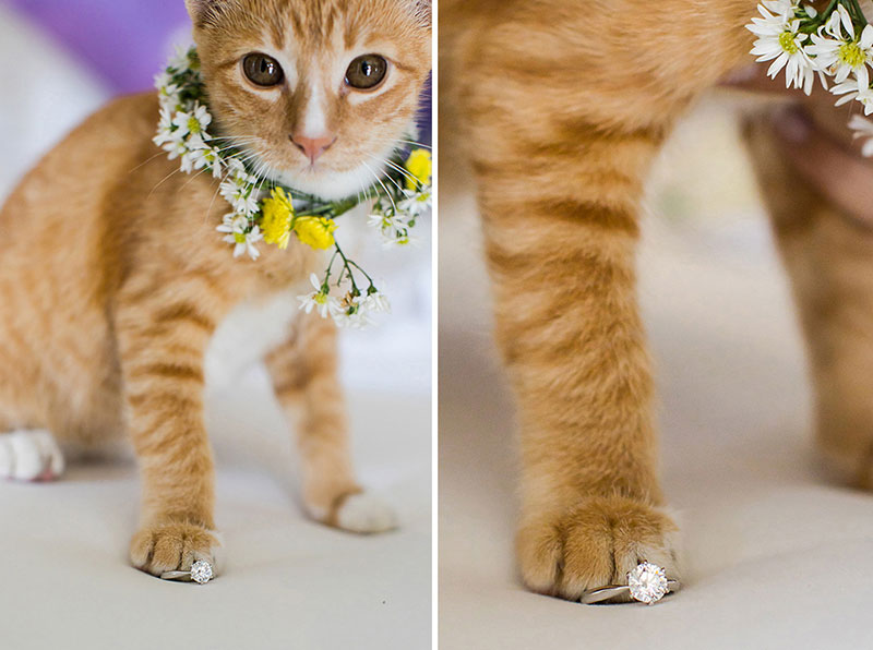 aleenta phuket wedding cat themed wedding boutique ilaire planner review 2