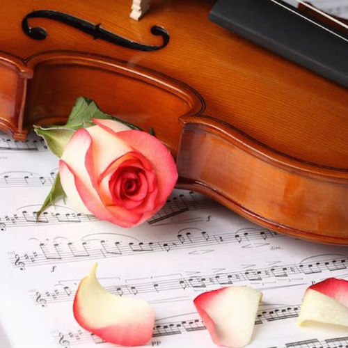 Musical Serenade Band or Quartet Marriage Proposal