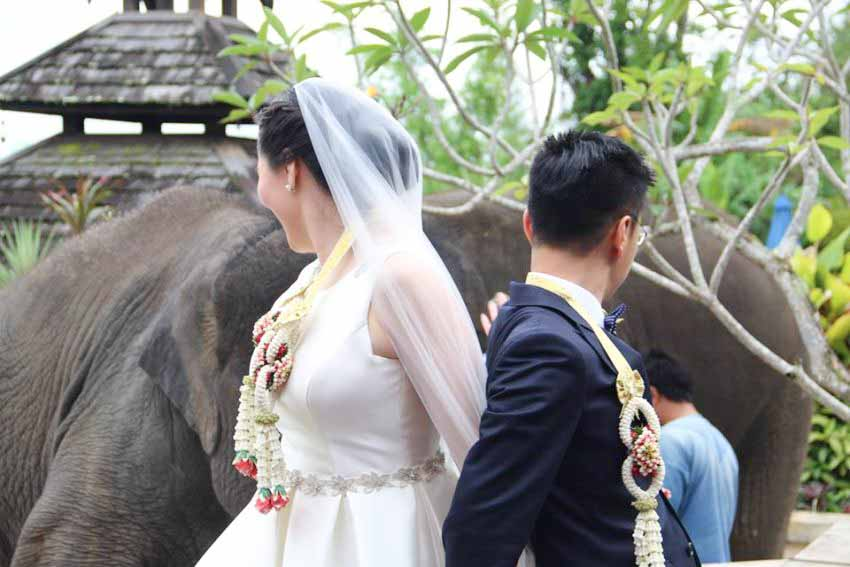 Anantara Golden Triangle Elephant Camp & Resort 大象營和度假村婚禮套餐(20人)